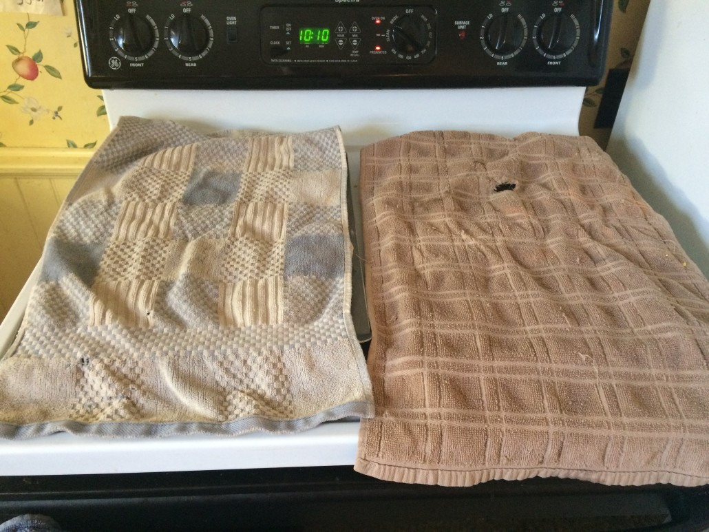 two trays of sourdough muffins covered with towels so they'll rise