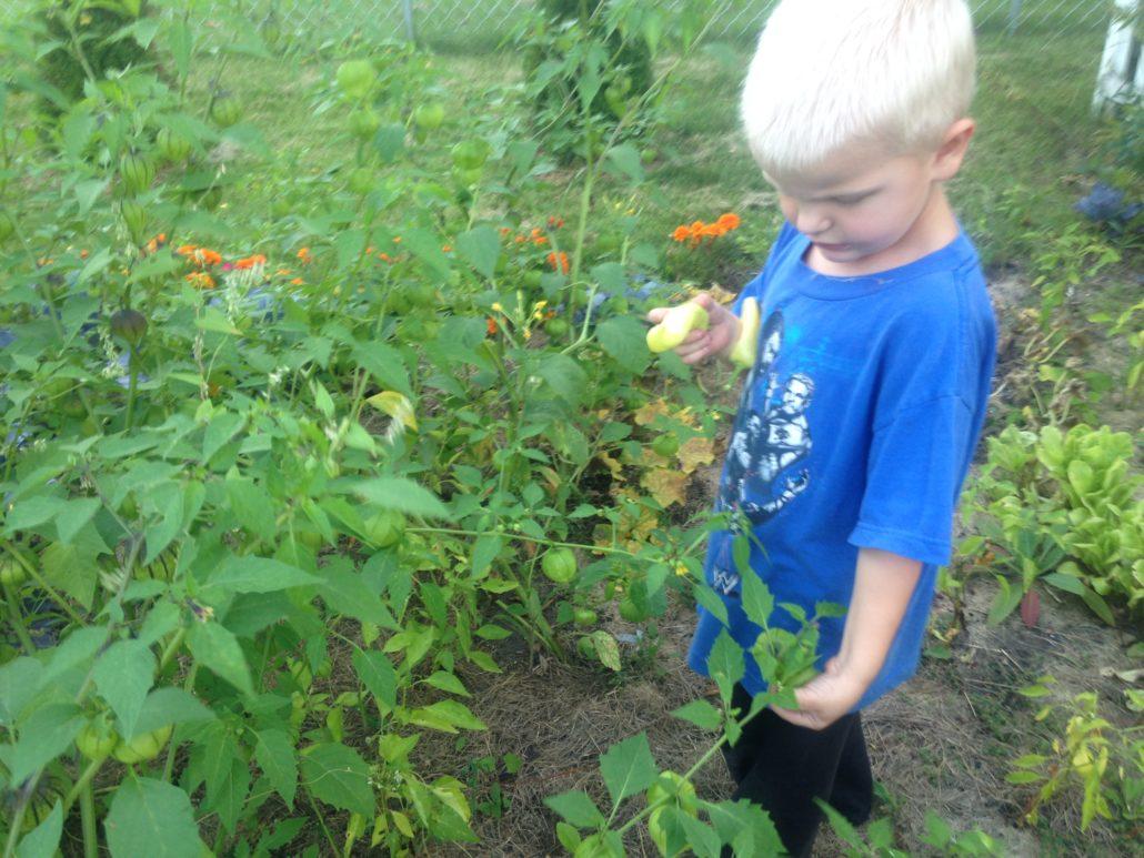 Elliot Loves Eating What He Picks from the Garden