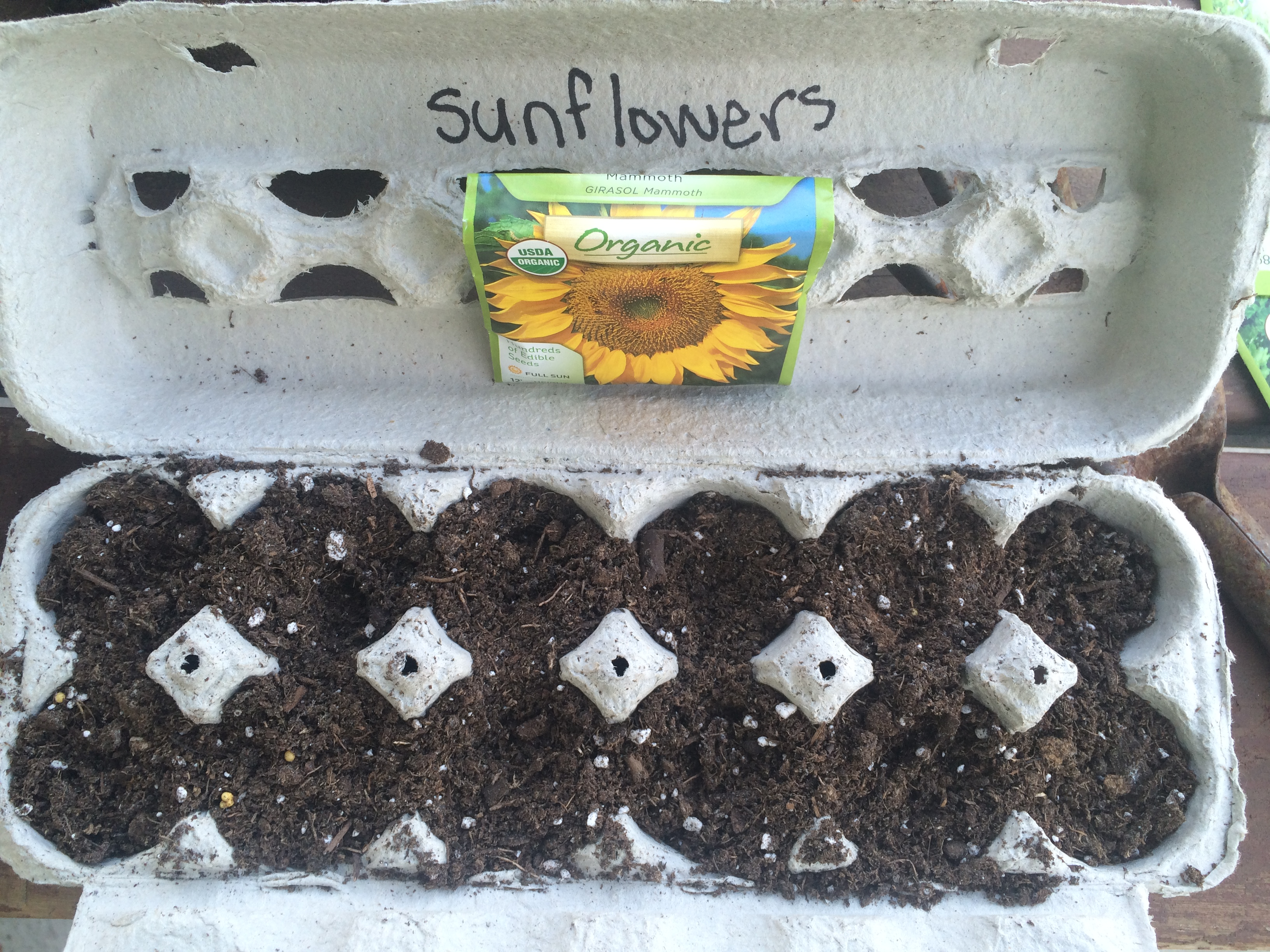 Sunflower Seeds Embracing Motherhood