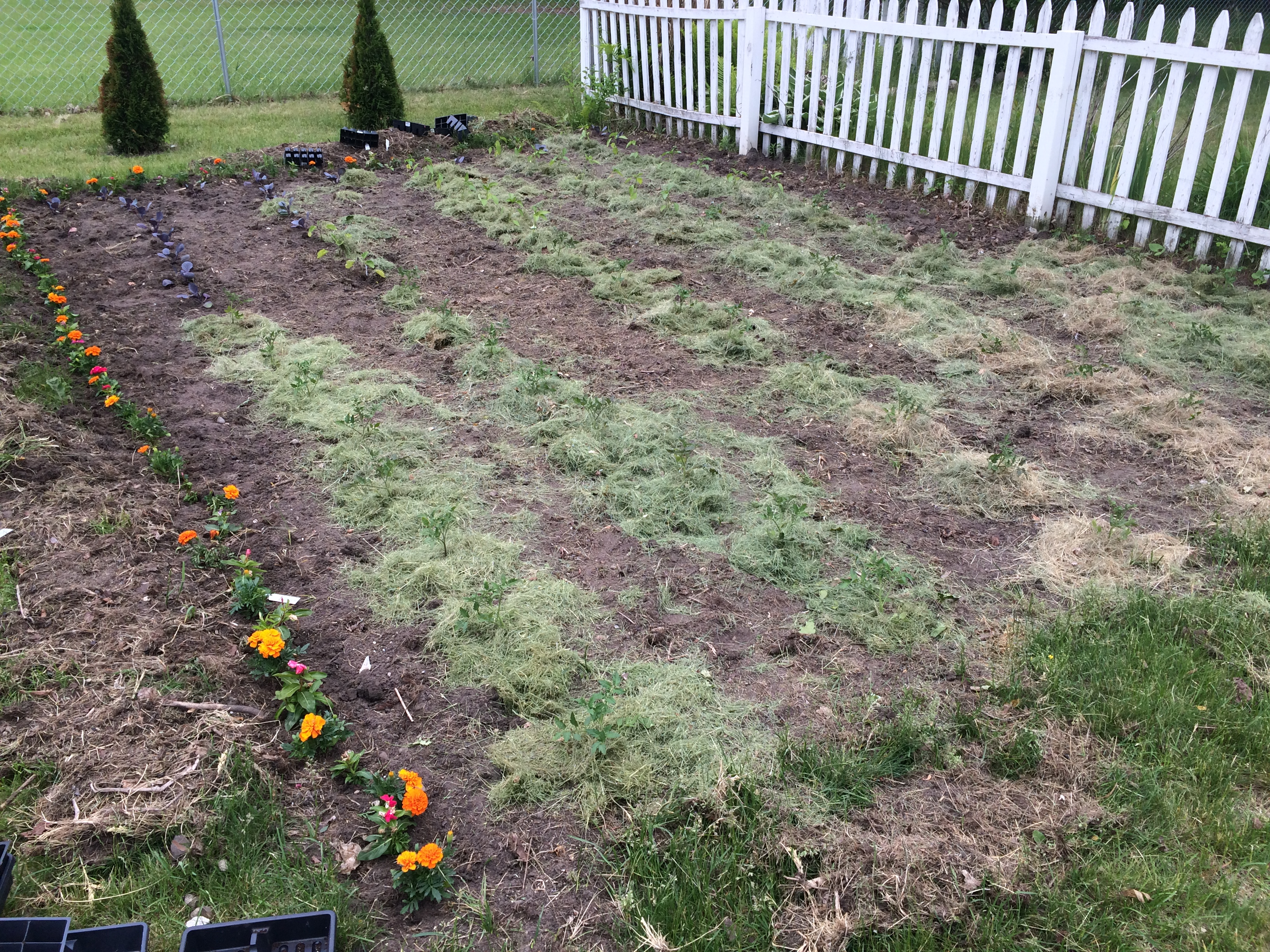 Using Grass Clippings to Prevent Weeds