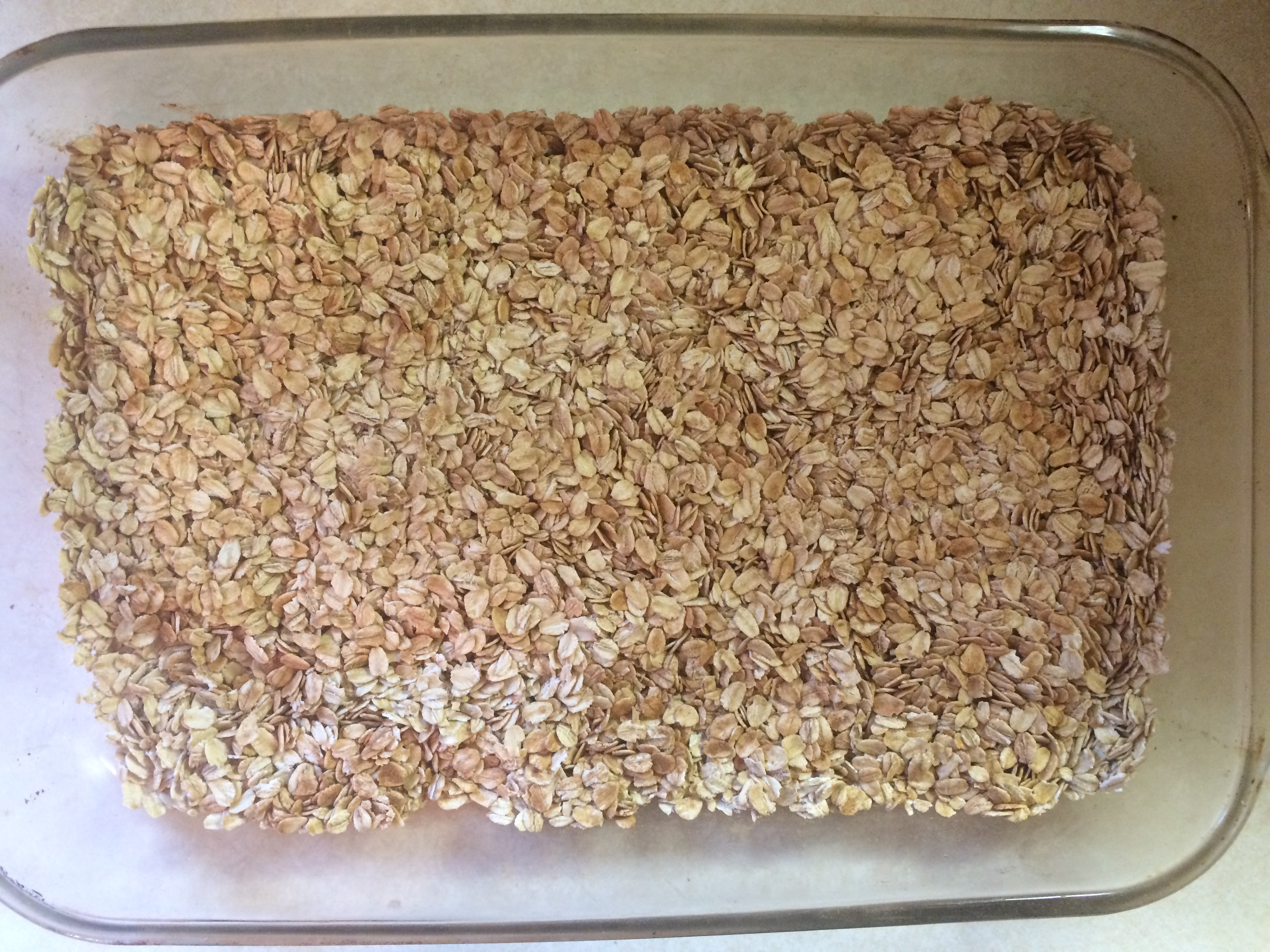 Organic Rolled Oats in a Glass Baking Pan