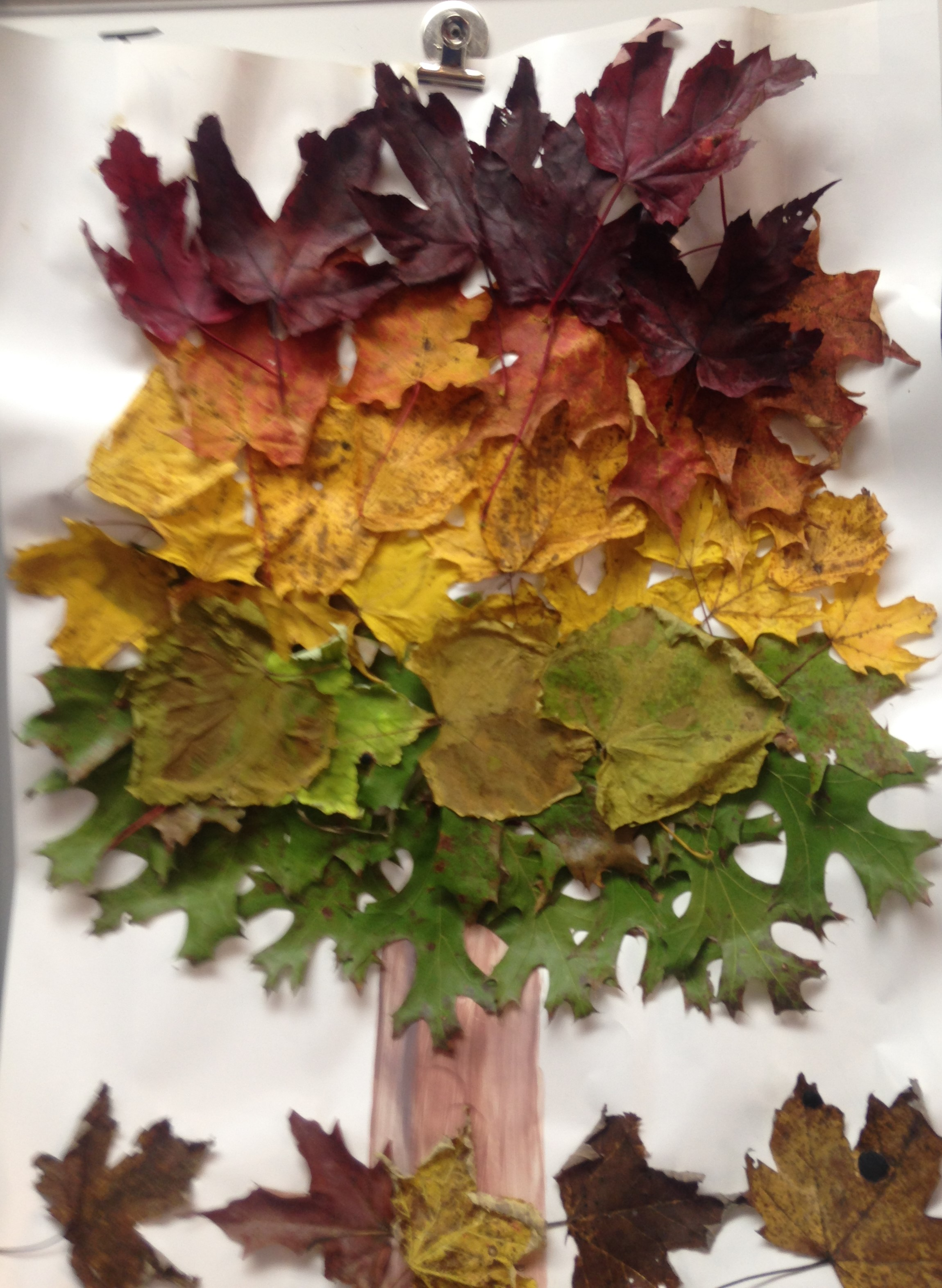 Tree Made Out of Leaves
