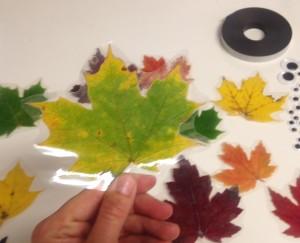 Laminate Border for Leaf Magnets