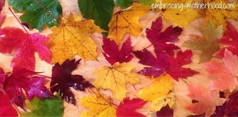 Embracing Motherhood Why Leaves Change Color in the Fall