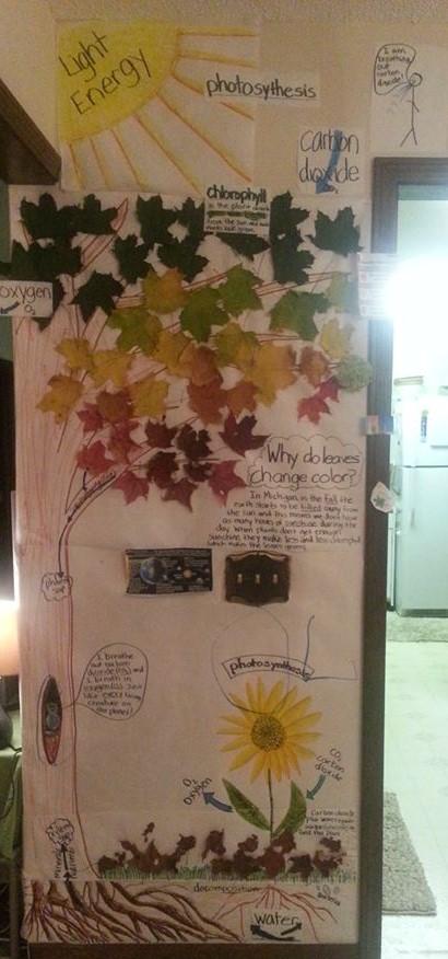Teaching Photosynthesis Wall Art