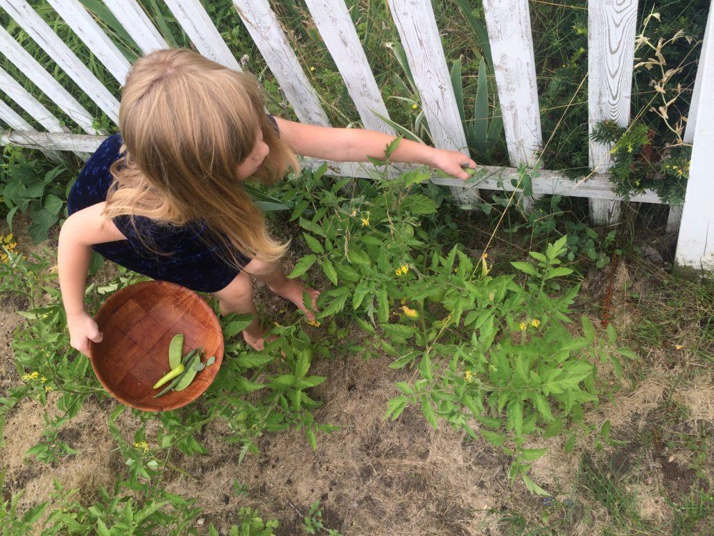 Ruby Barefoot Picking Beans Embracing Motherhood